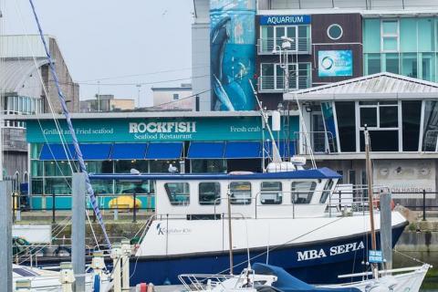 Rockfish Plymouth