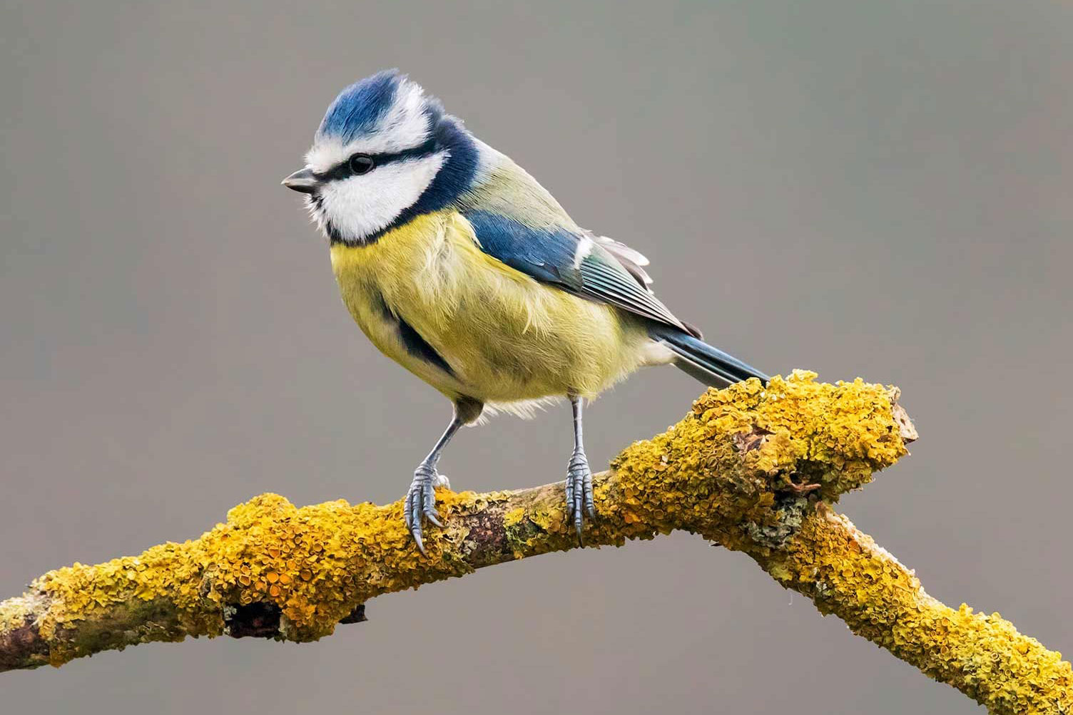A seasonal guide to Bird watching in South Devon