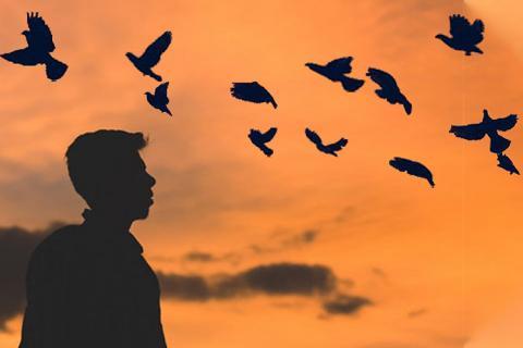 Homing Birds